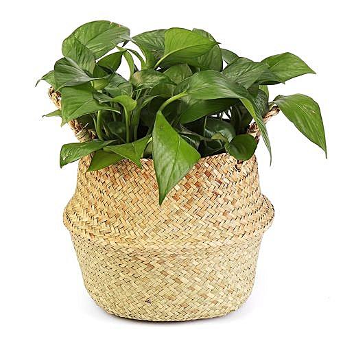 Details About Waterproof Seagrass Storage Laundry Basket Home Garden Decors Plants Pots Large