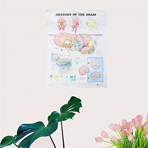 Anatomy Of The Brain Posters Anatomical Silk Cloth Chart Human Educational Decor