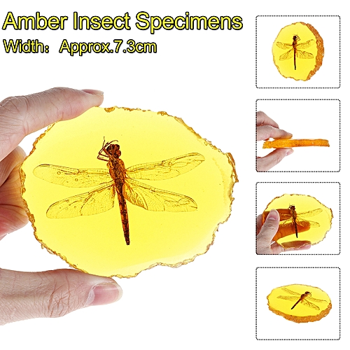 Amber Fossil Insects Dragonfly Butterfly Manual Polishing True Insect Craft Gift