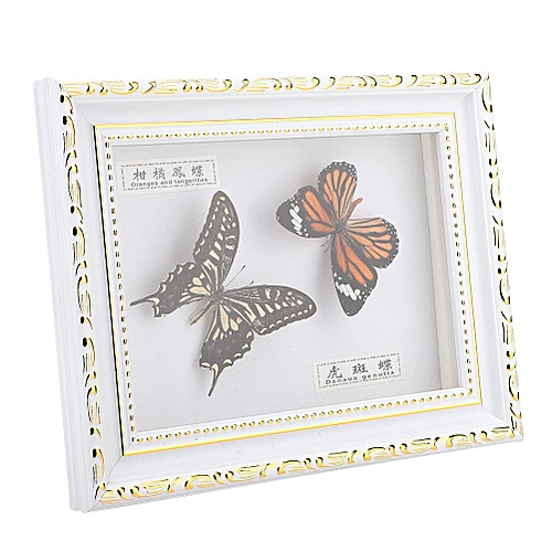 Butterflies Insect Specimen Photo Frame Craft Birthday Gift Home Ornament
