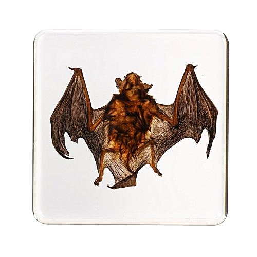 Bat Insect Specimens In Lucite Handmade Resin Paperweight Collection Education