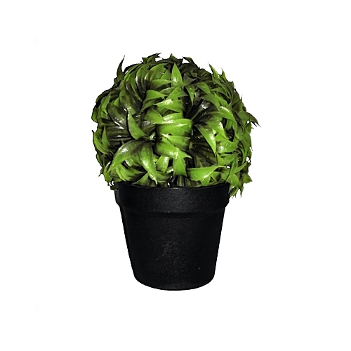 Jane Potted Plant in Plastic Pot - 17cm