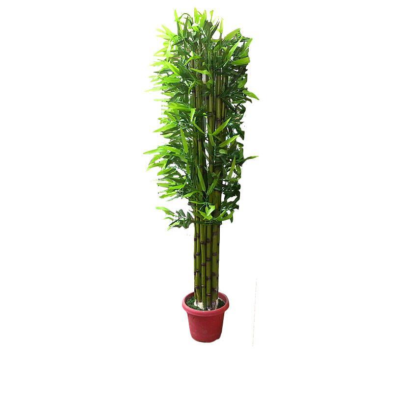 Green Palm Tree - 220cm