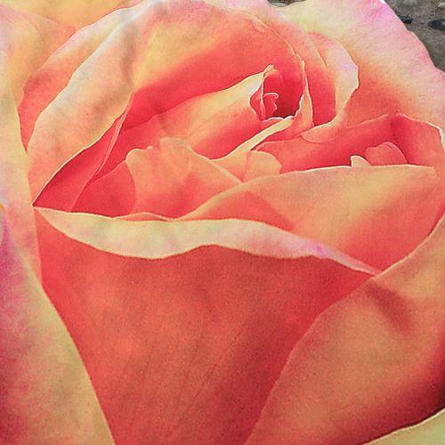 Irregular Rose Flower Hippie Tapestry Beach Picnic Throw Yoga Mat Towel Blanket