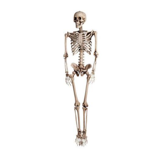 Halloween Simulation Hanging Skeleton Human Body Bone