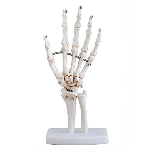 Hand Joint Model Life-size Human Medical Anatomical Study Hand Skeleton Model